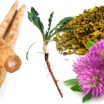 herbs_liver_drugs_health